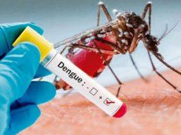 DENGUE: Determination of anti-virus IgG / IgM by immunochromatographic method.